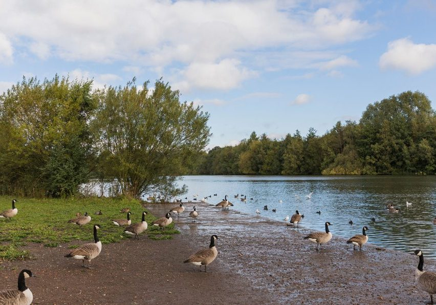Sandwell country park